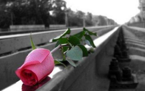 rose train